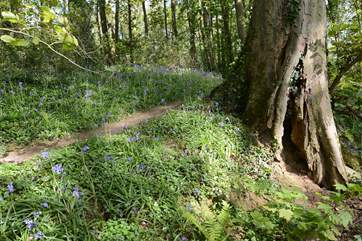 Nearby Bockhampton woods - a great place to visit, Hardy's Cottage and visitor centre are here too.