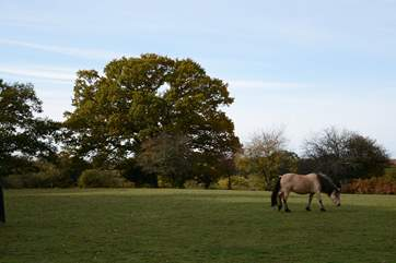 The New Forest National Park is less than a one hour drive from Tolpuddle.