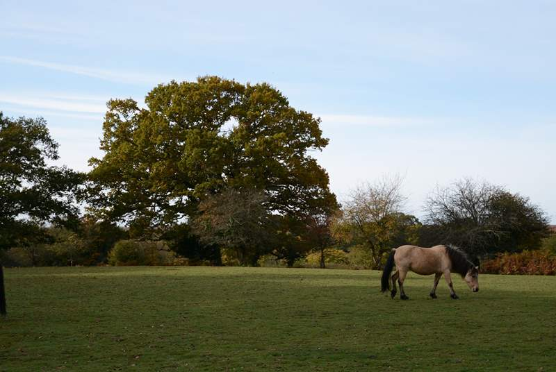 The New Forest National park is less than a 1 hour drive from Tolpuddle.