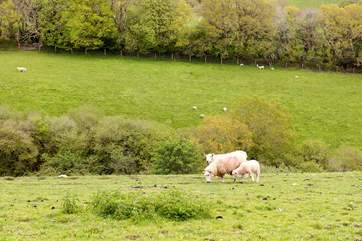 Enjoy watching the livestock in the surrounding fields.