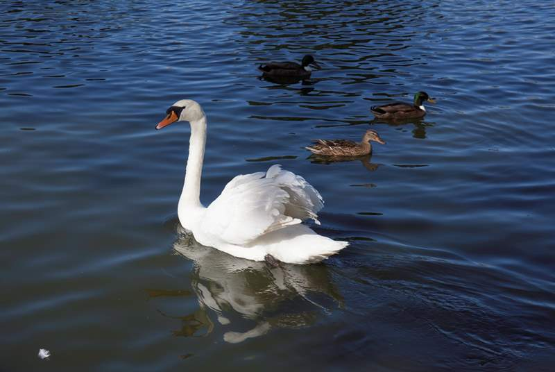 Take a walk down to the boating lake and feed the swans and ducks.