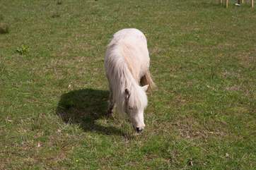 In the neighbouring field, you will find 'Lucy' the pony.