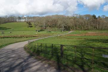The Penrose Estate is very close to the barn, here you will find a network of paths winding through this picturesque estate and around Loe Bar lake.