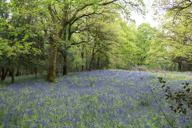 In the spring, bluebell woods stretch throughout the unspoilt woodland - feel welcome to wander and explore.