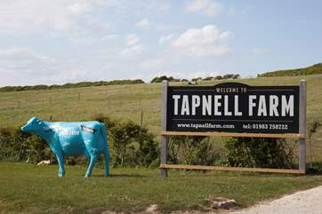 Rain or shine, the new favourite attraction has something for everybody! Pop down to Tapnell farm to feed the animals, bounce away on the jumping pillow and grab a bite to eat