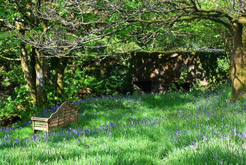The bluebell garden, out in full bloom. Such a fabulous array of colour.