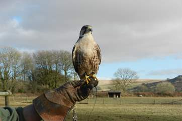 Or possibly someone in your party has a love for birds of prey. If so, you can arrange for your neighbouring falconer to bring his splendid birds to your doorstep.