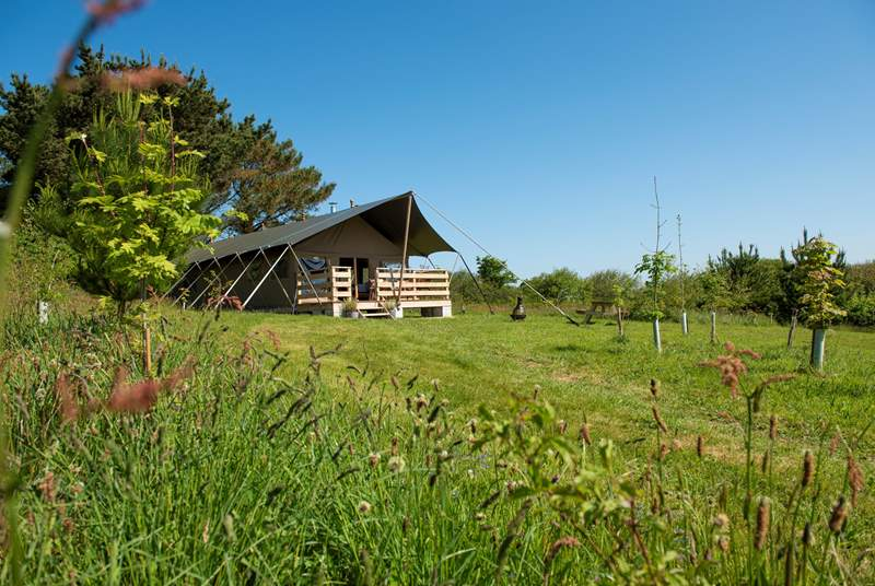 Tembo transports you to the wilds of Africa while relaxing in the tranquillity of the Cornish countryside.
