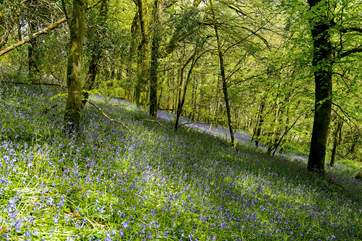 The owners are happy for you to enjoy their woodland walks - the bluebell carpet in the spring is not to be missed!