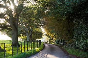 The driveway leading to Midleydown - let the adventure begin!