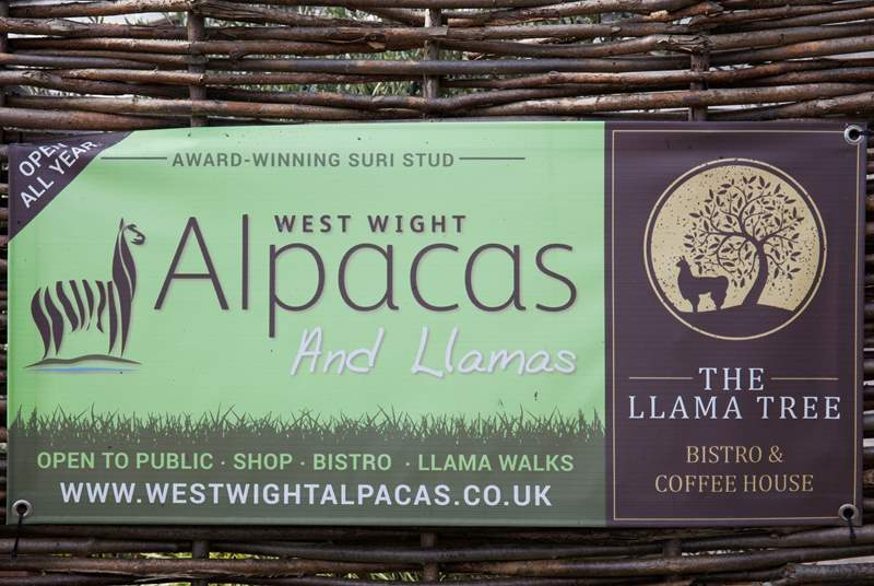 Why not go and visit the Alpacas?