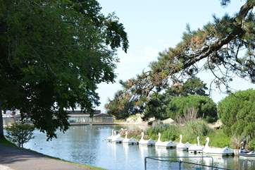 Take a walk to canoe lake and take a ride on a swan boat!