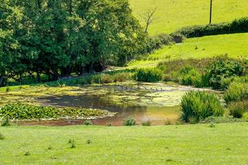 There is a pond in the adjoining field, overlooked by the garden, which attracts all kinds of birds and wildlife (please take care of children).