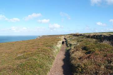 There are fabulous coastal walks so bring your four-legged friend to enjoy the great outdoors!