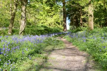 Nearby woodland walks are wonderful for you and your dog.