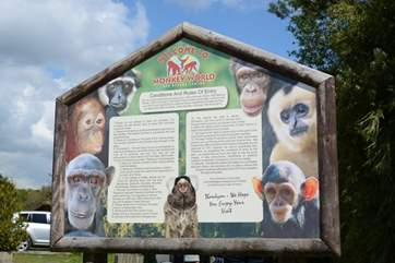 Monkey World is a very short drive from Cedar Lodge.