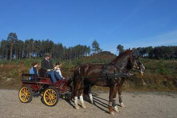 The owners of Cedar Lodge have their own business providing horse drawn carriages for weddings and special occasions, you may be able to accompany them on a drive.