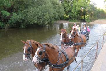 The owner's magnificent horses; you may be able to join them on  a drive in the beautiful Dorset countryside.