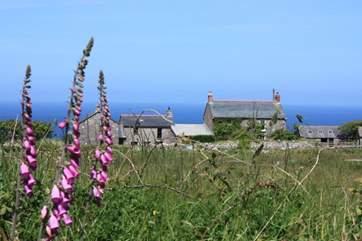 Calartha Farm, with the Atlantic Ocean as its backdrop.