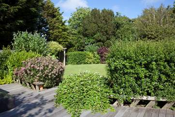 A beautiful array of plants and shrubs in the garden.