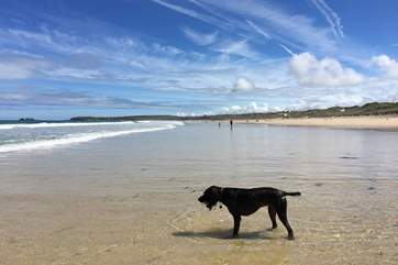 Why not venture to Mexico Towans at Gwithian as this gorgeous beach is dog-friendly all year round, just ask Monty!