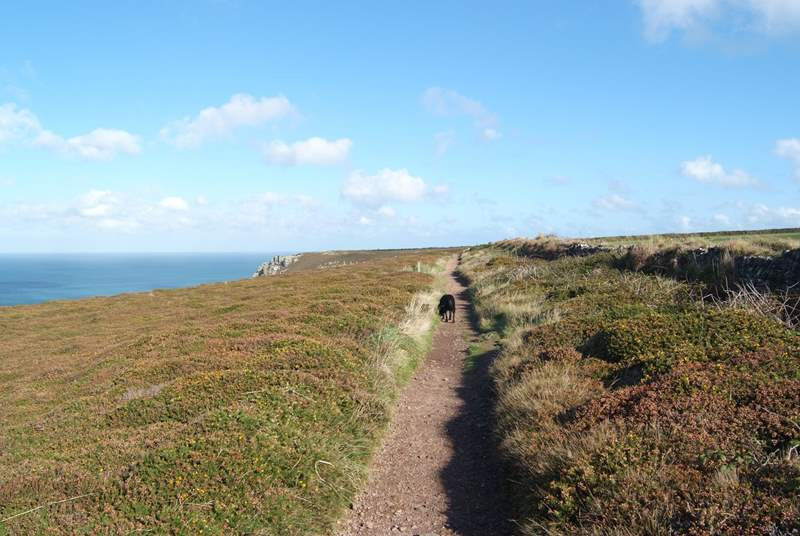 Take your pooches for a walk along the coastal footpaths.
