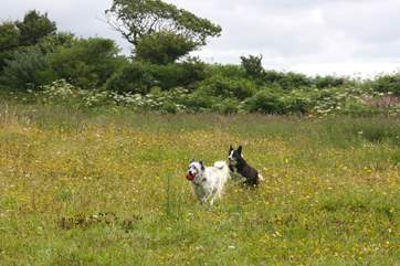 The paddock next to the cottage is perfect for your four-legged friends to burn up some energy.