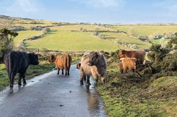 You may come across a different kind of traffic jam on the moorland lanes.