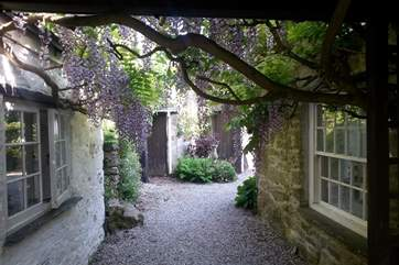 The covered walkway from the kitchen to the snug - it really is quite a display in the spring.