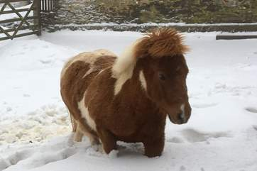 Toffee, the Shetland pony is a bonus for guests to see too.