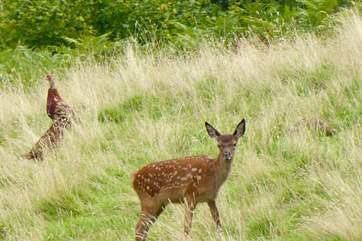 You are very likely to see wild deer in the fields that surround Stockham Farm.