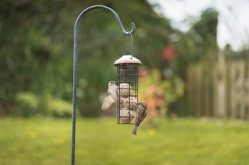 A variety of different birds enjoy the feeders at Owlan.