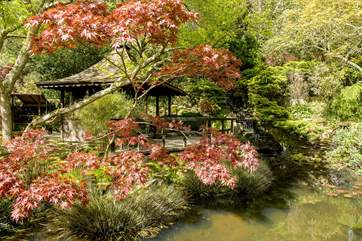 The Japanese Gardens are quite stunning.