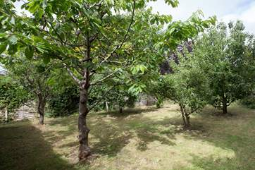 At the far end of the garden is a little fruit orchard. This is a wonderful garden for children to explore as it is fully enclosed.