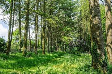 Or perhaps a wander through the woods could be a delightful way to spend a few sunny hours.
