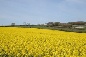 Rural Dorset in May.