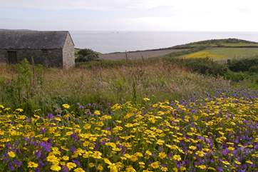 A great area for exploring the cliff paths of the far west.