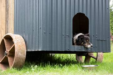 They can even sleep in their own mini shepherd's hut kennel (if they want) which is situated next door to Shepherd's Rest.