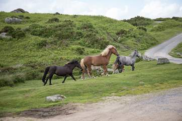 As you are situated on the eastern edge of Dartmoor, a visit to the beautiful moors is a must.