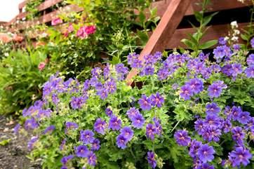 Pretty borders in the gardens.