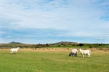 Animals roam freely around the moors