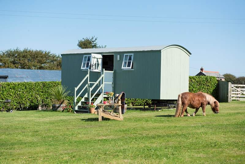 Hannah's Haven is sat in a large meadow, with just donkeys and ponies for neighbours (including Dinky, the very cute Miniture Shetland!).