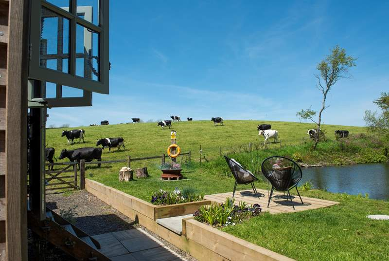 Here, the cows are your only neighbours!