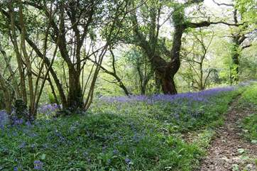 One of the many woodland walks nearby, especially lovely in the bluebell season.