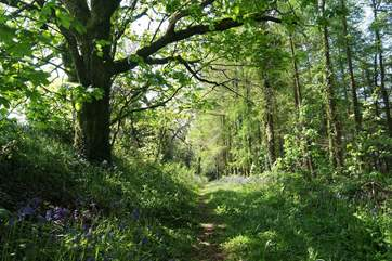Guests can walk through the Owners' lovely woods and fields.
